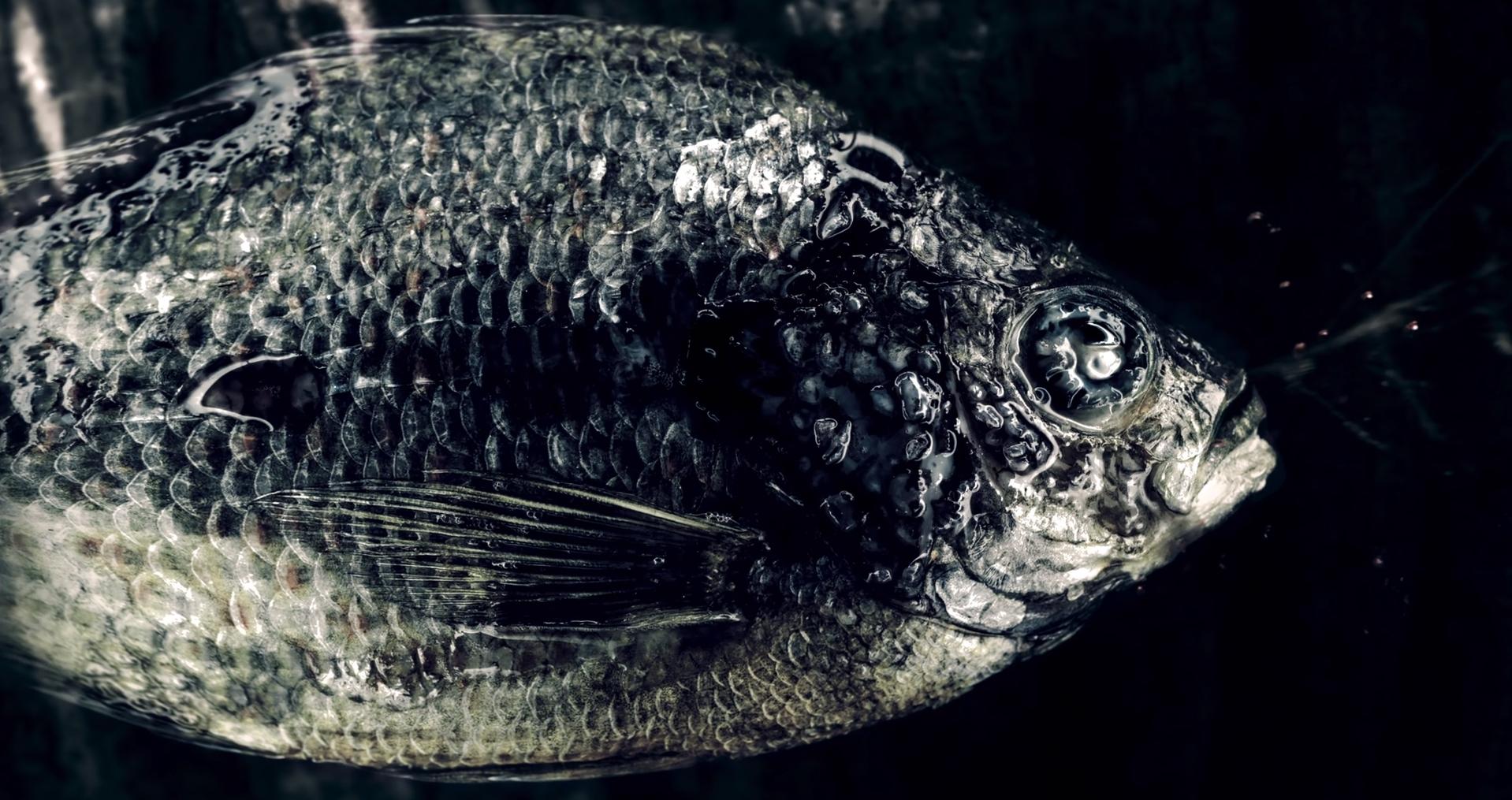 Incluso un pescado deshidratado puede denotar belleza. Su piel y sus ojos se acaban quebrando.